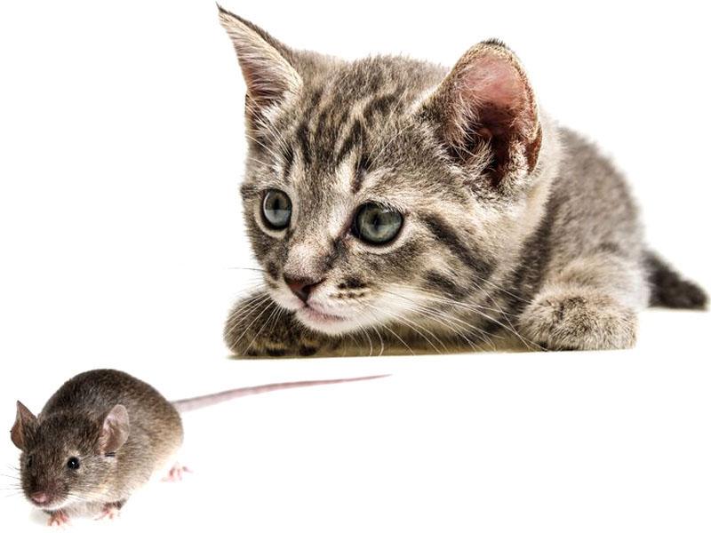 Piante che allontanano i topi cespuglio fiorito di - Allontanare i gatti dal giardino ...