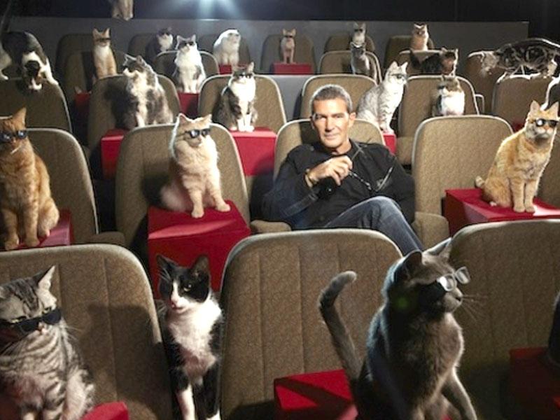 Gatti Famosi Al Cinema E I Gatti Più Famosi Nei Film Da Colazione