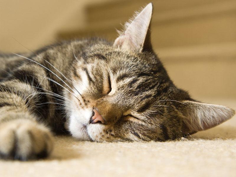 Dormire teen micio foto