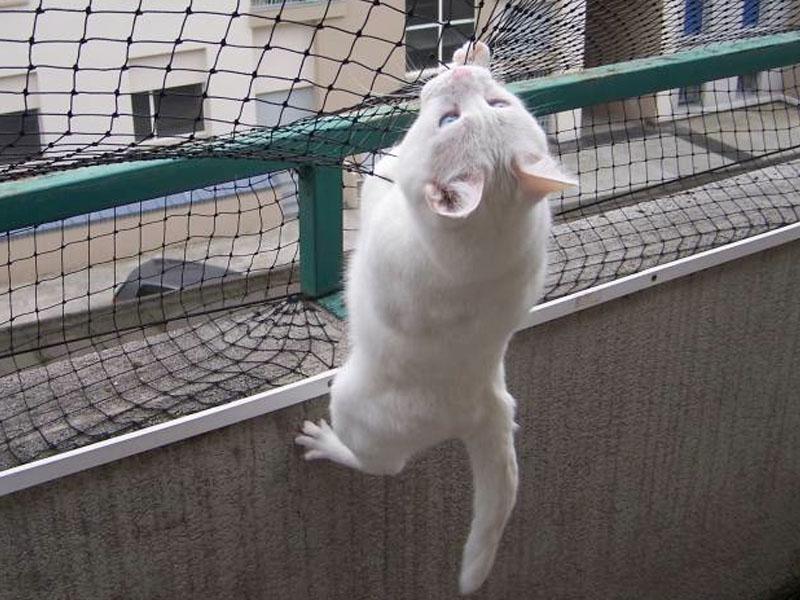 Gatti in condominio leggi e regole - Rete per gatti giardino ...