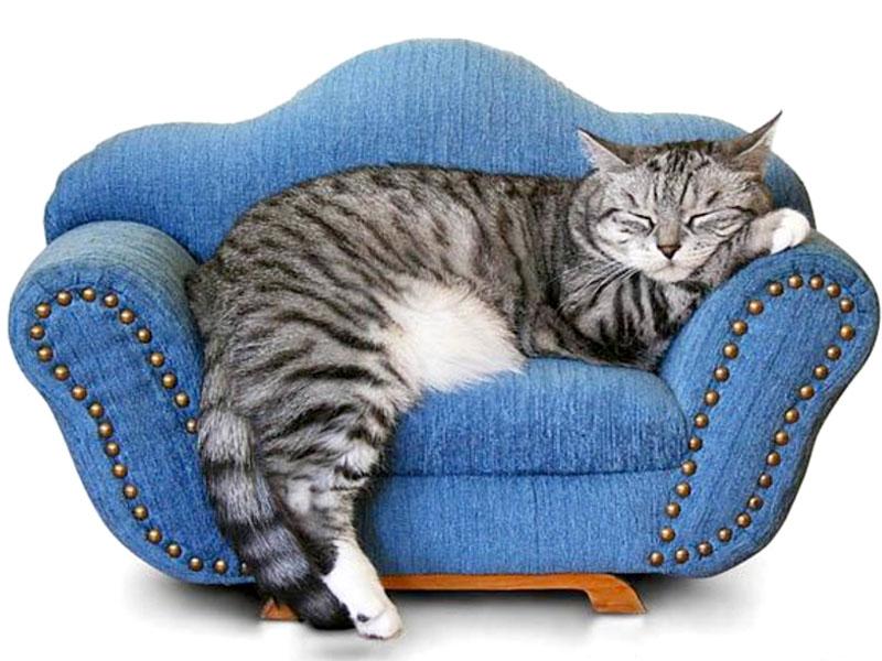Gatto in appartamento pro e contro - Gatto defeca per casa ...