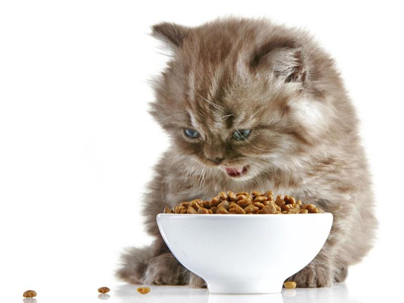 Svezzamento dei gattini for I gattini piccoli