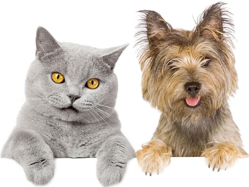 Cane e gatto consigli per la convivenza for Casa progetta il trotto del cane