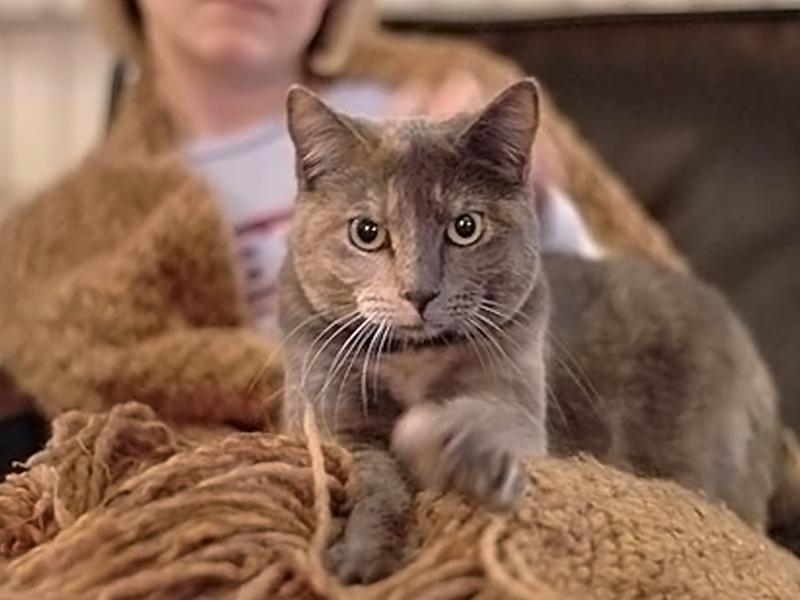 Fare la pasta comportamento del gatto - Che malattie portano i gatti ...