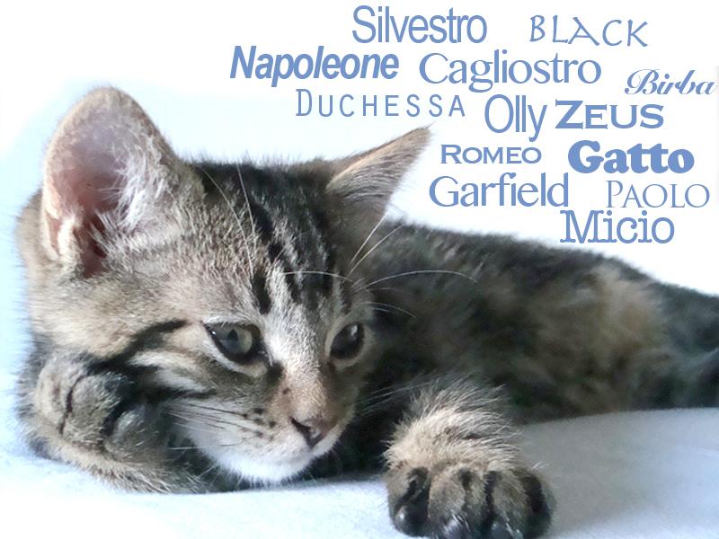Super Quale nome dare al gatto GZ27