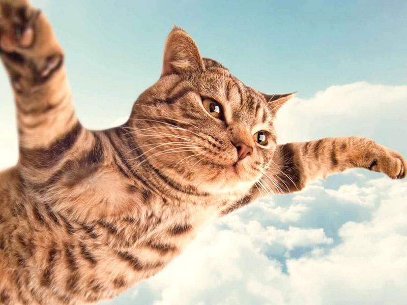 Pregiudizi da sfatare sui gatti - Che malattie portano i gatti ...