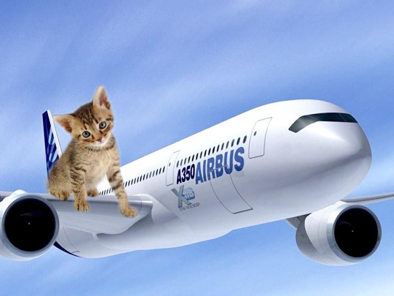 Viaggio in aereo col gatto - Ml da portare in aereo ...