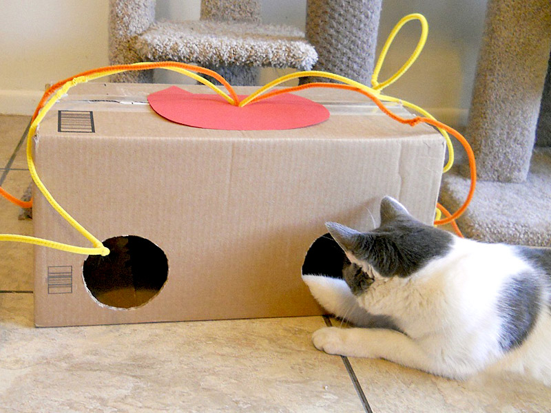 Giochini faidate per gatti idee for Giochi di societa fai da te