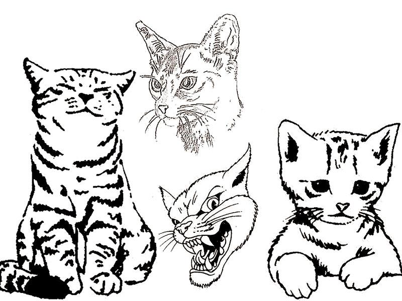 Tatuaggi tattoo di gatti esempi e consigli - Gatto disegno modello di gatto ...
