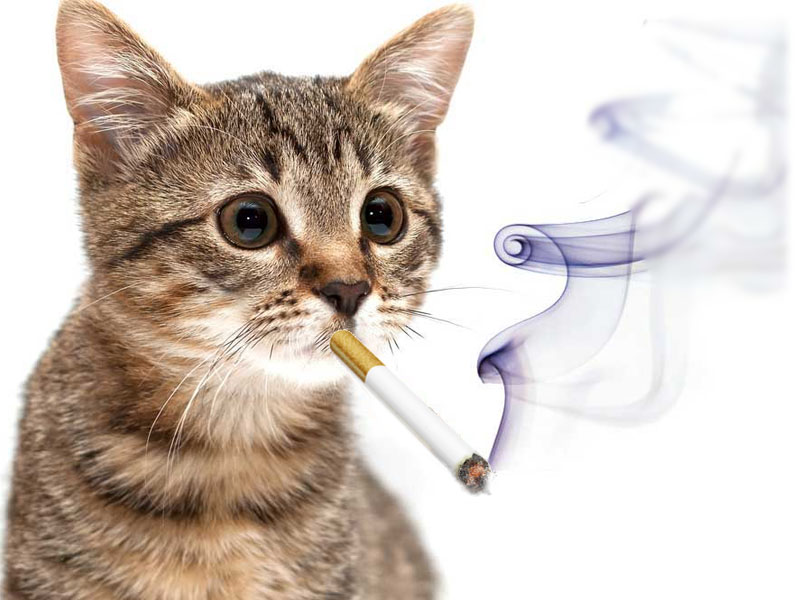 I gatti e il fumo di sigaretta news - Cucina casalinga per gatti ...