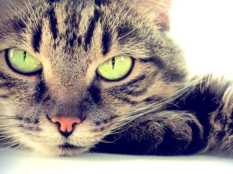 Come ci vede il nostro gatto comportamento - Che malattie portano i gatti ...