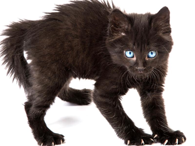 Ansia e stress dei gatti malattie dei gatti - Che malattie portano i gatti ...