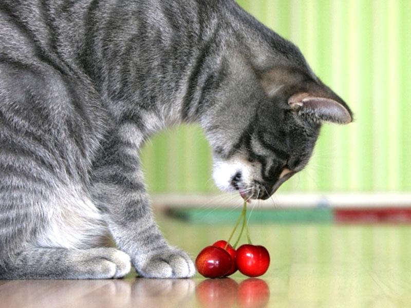 frutta e verdura alimentazione del gatto