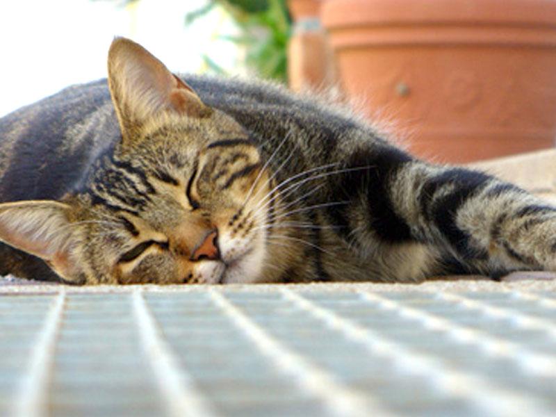 Sangue nero: se il sangue presente nelle feci del gatto è di colore nero, invece, vuol dire che è stato digerito e che quindi proviene dal tratto.
