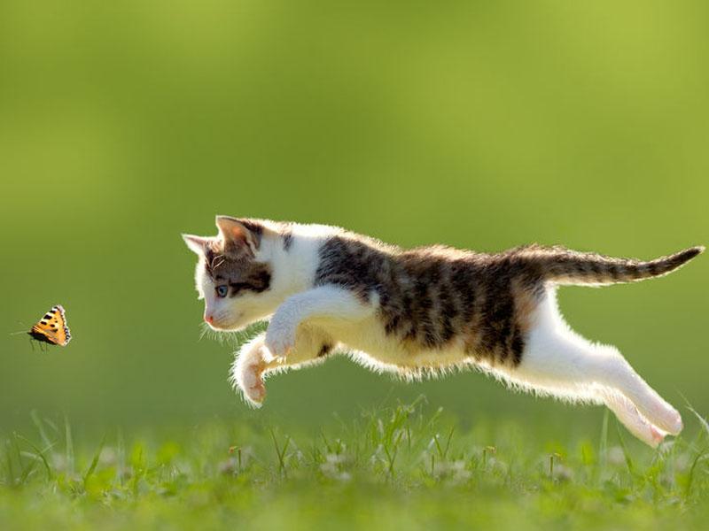 Gatto in semilibert cosa fare - Che malattie portano i gatti ...