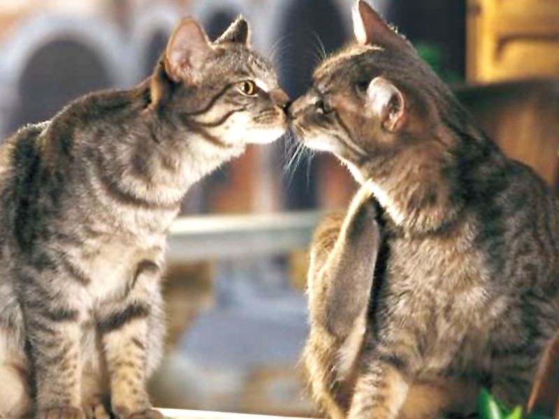 Conosciuto Aforismi e frasi sui gatti LK62
