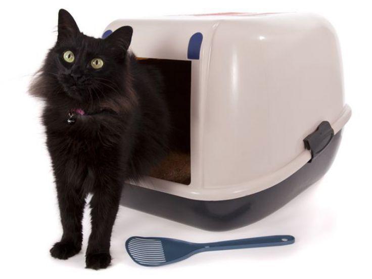 Cassetta igienica e lettiera per gatti