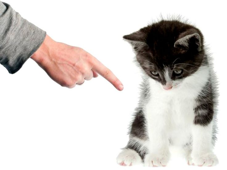 Educazione e addestramento del gatto
