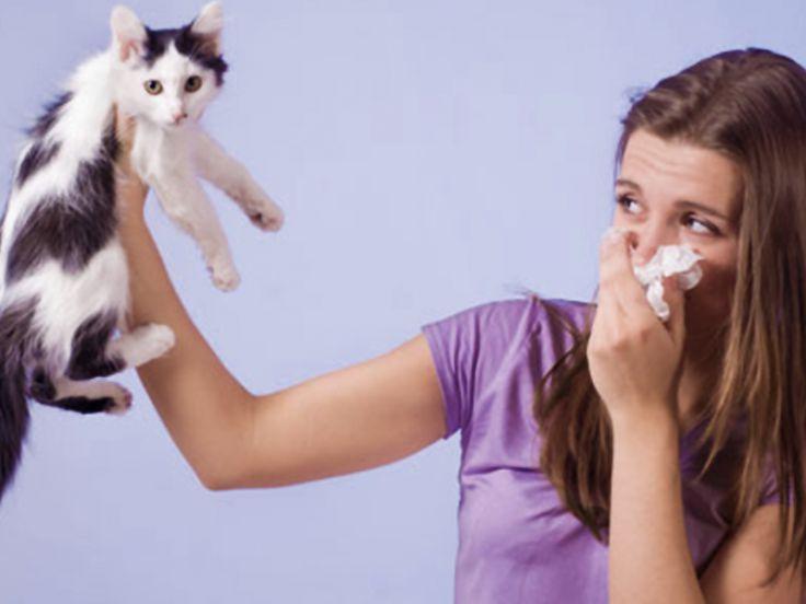 Malattie Dal Gatto Alluomo