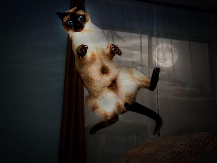 Cosa Fare Quando Il Gatto Disturba Di Notte E Non Dorme