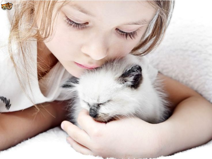 Grazie ai gatti una cura per l'Alzheimer infantile