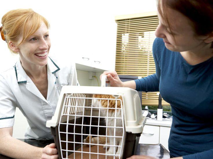 A chi affidare il gatto per lunghe assenze