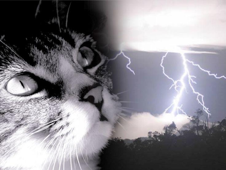Il sesto senso dei gatti