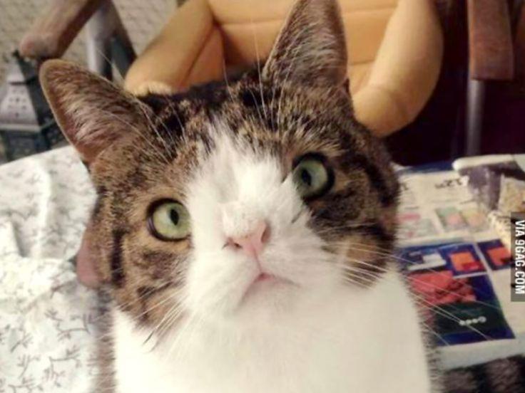 Monty. Un gatto con la sindrome di Down