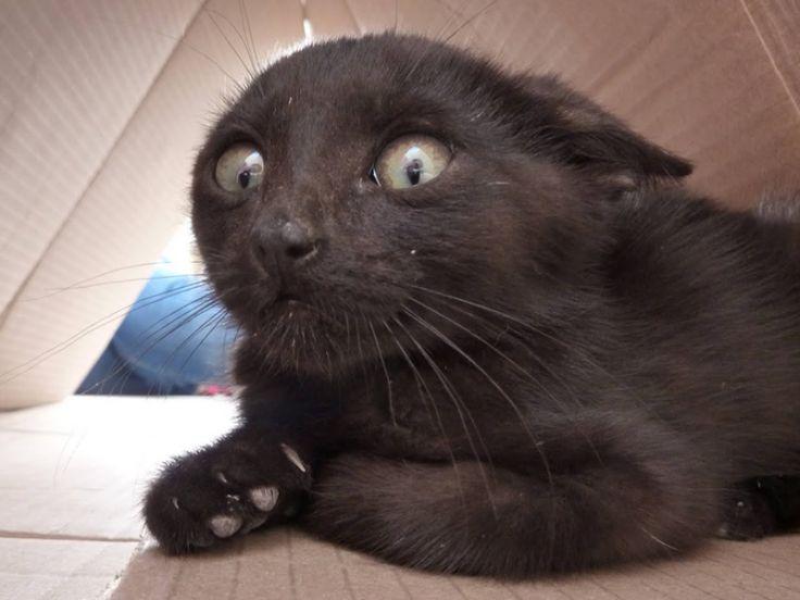 Anche i gatti percepiscono le emozioni dei padroni