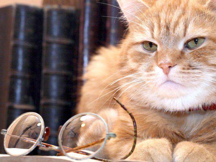fame sete perdita di peso minzione frequente in un gatto