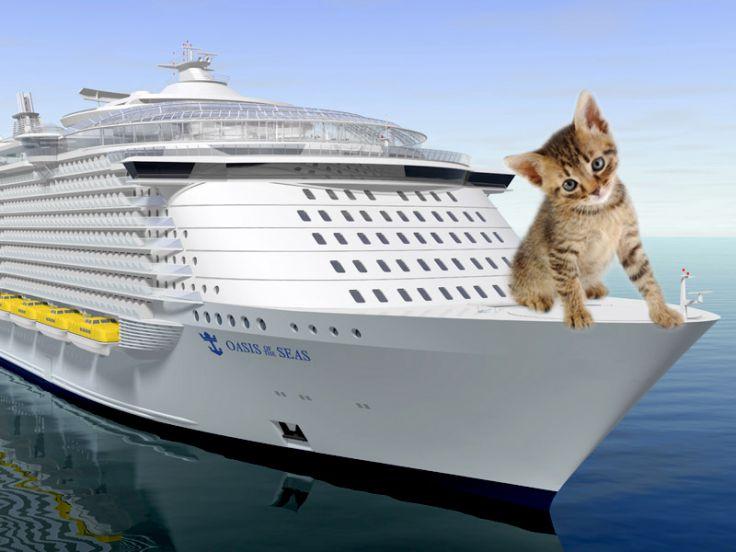 Viaggiare col proprio micio in nave o traghetto