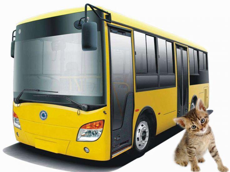 Come viaggiare col gatto sui mezzi pubblici