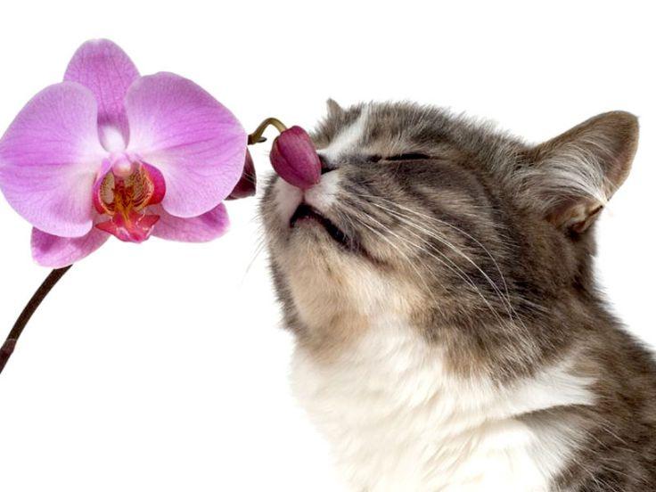 Aromaterapia per gatti