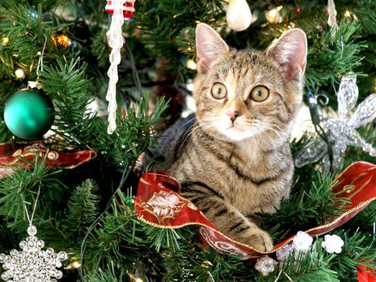 Come fare un albero di Natale a prova di micio