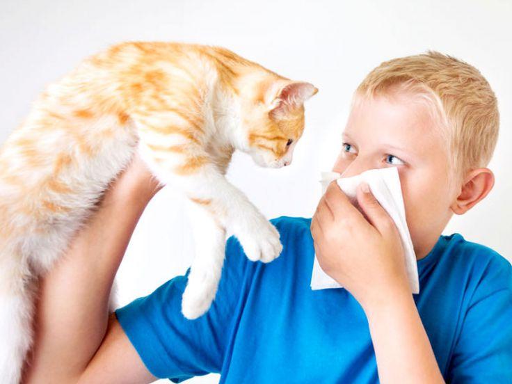 Gatto e raffreddore