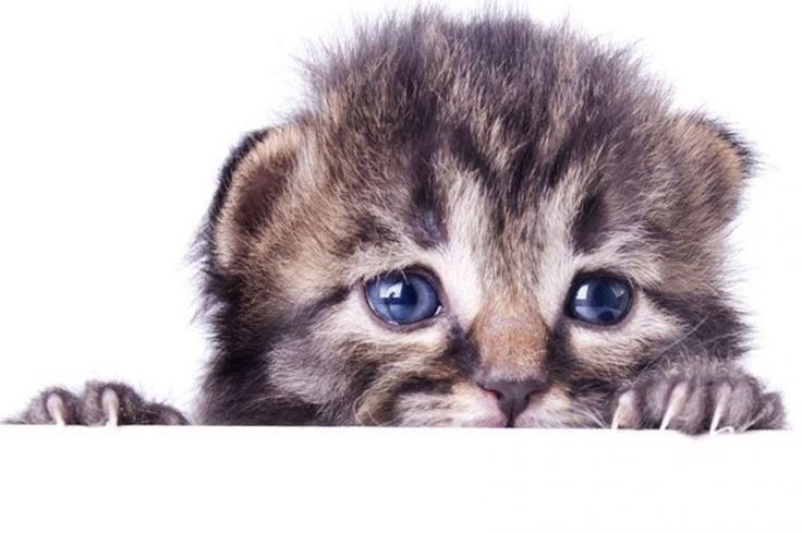Le paure dei gatti