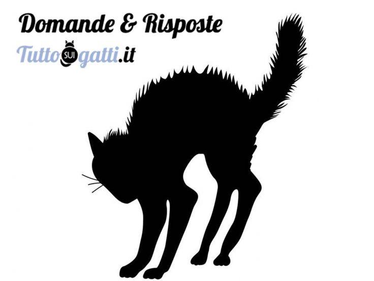 FAQ comportamento dei gatti