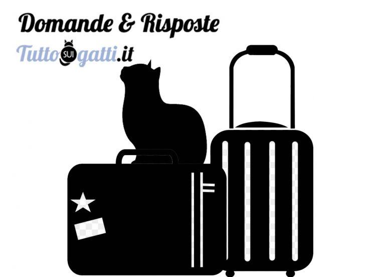 FAQ Il gatto in viaggio