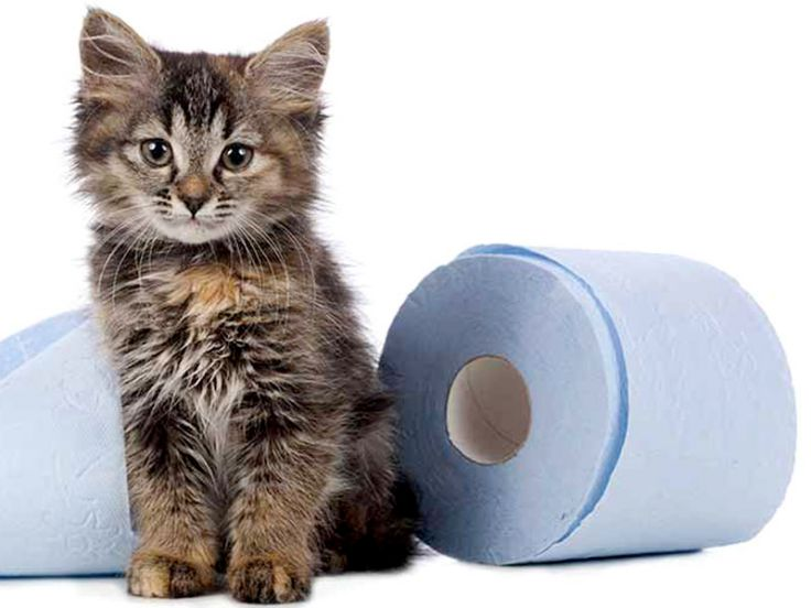 di diarrea gatto