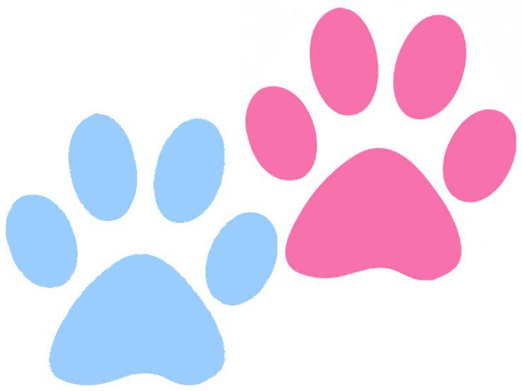 Differenze tra gatto maschio e gatto femmina