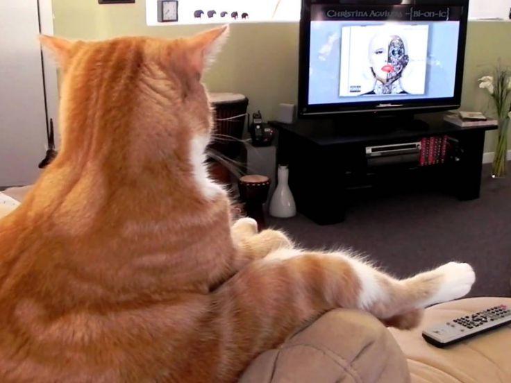 I gatti guardano la TV?