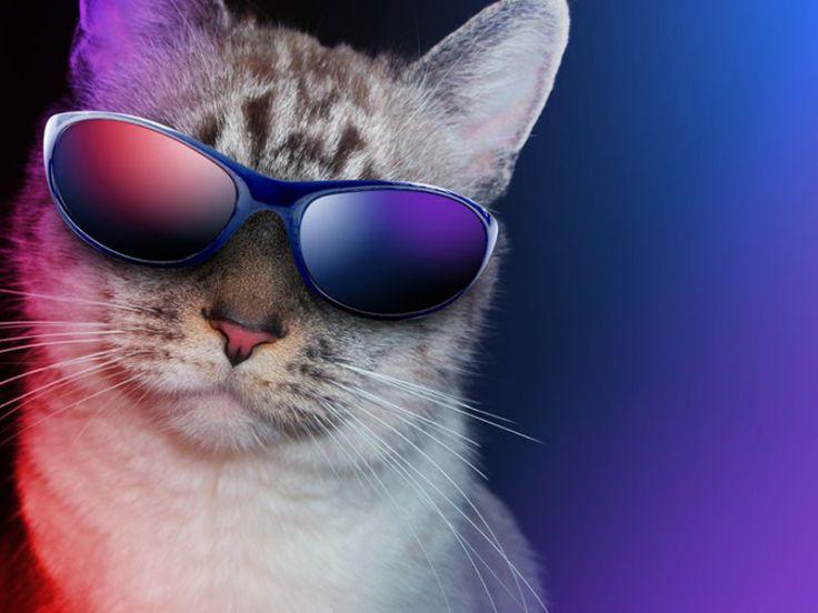 Il Carattere Dei Gatti Comportamento Dei Gatti