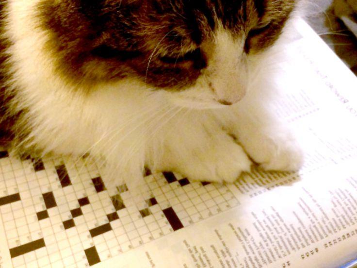 Gli interessi del gatto