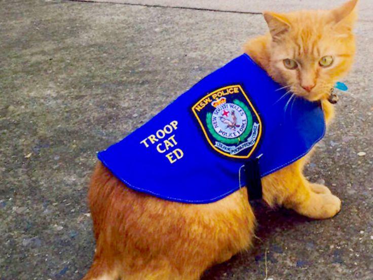 Ed gatto poliziotto