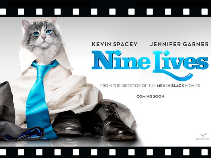 Film al cinema Una vita da gatti, Nine lives