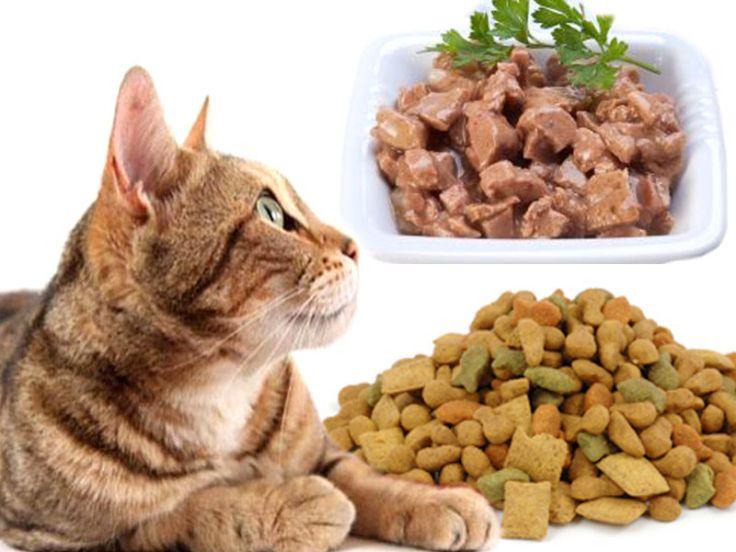 Cibo Secco E Umido Alimentazione Gatti