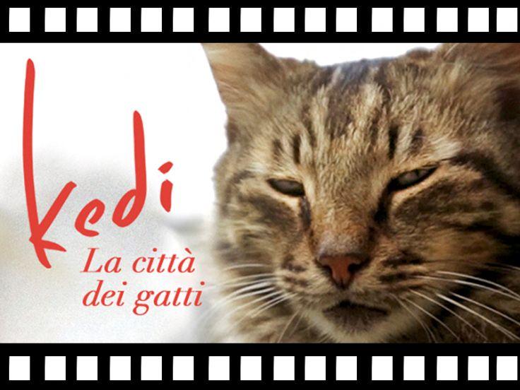 Film: Kedi-La città dei gatti