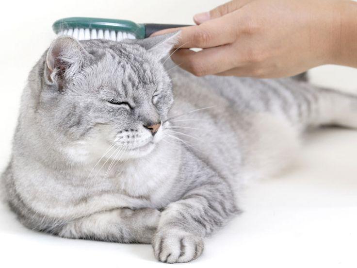Pelo e toelettatura dei gatti