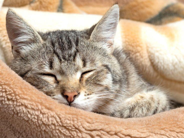Malattie respiratorie dei gatti