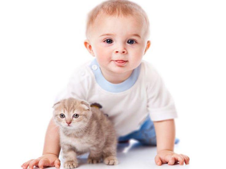 Come capire l'età del gatto